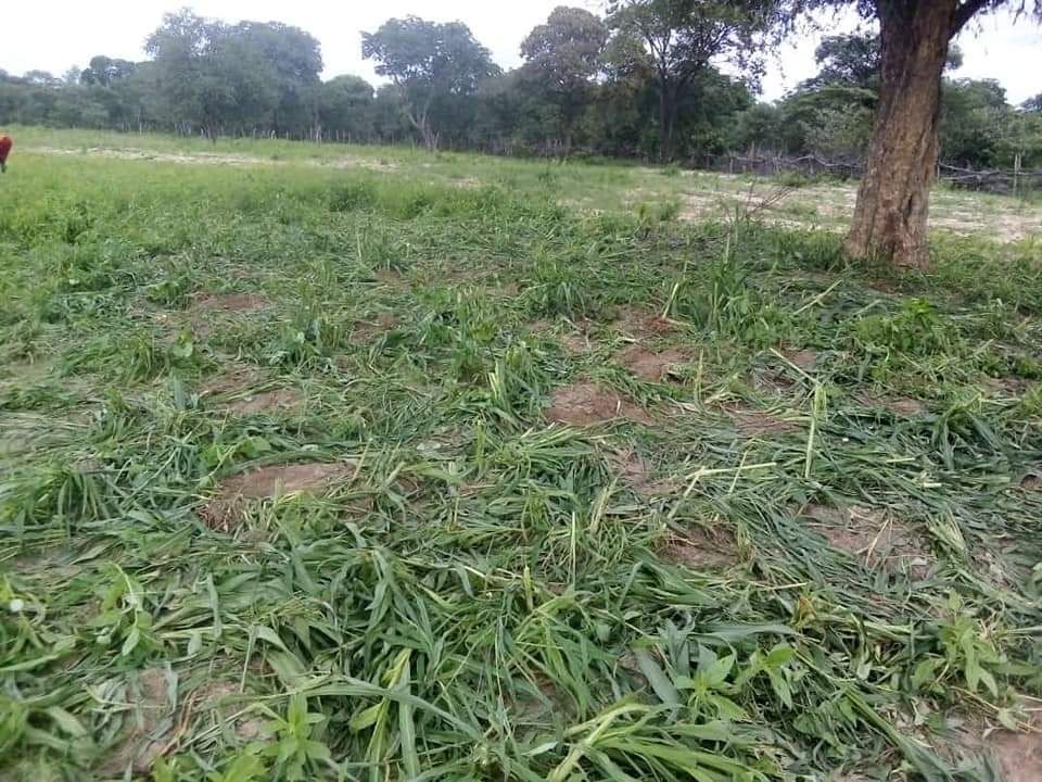Govt to compensate Ohangwena farmers