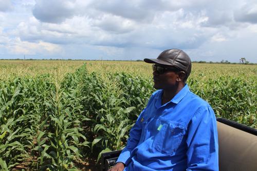 Farmers optimistic of bumper harvest