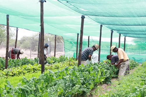 Food security remains satisfactory