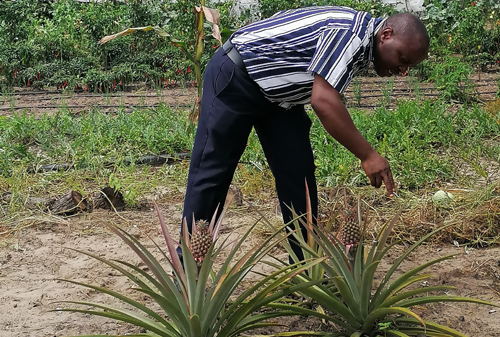 Agricultural subsidy bears fruit in Zambezi