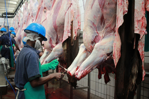 FMD dashes beef farmers hope