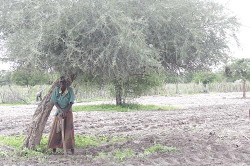 Oshikoto farmers grateful for rain