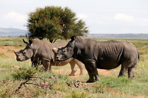 Poaching cases down in 2020