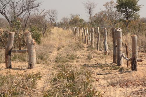 Govt toughen up on illegal fencing