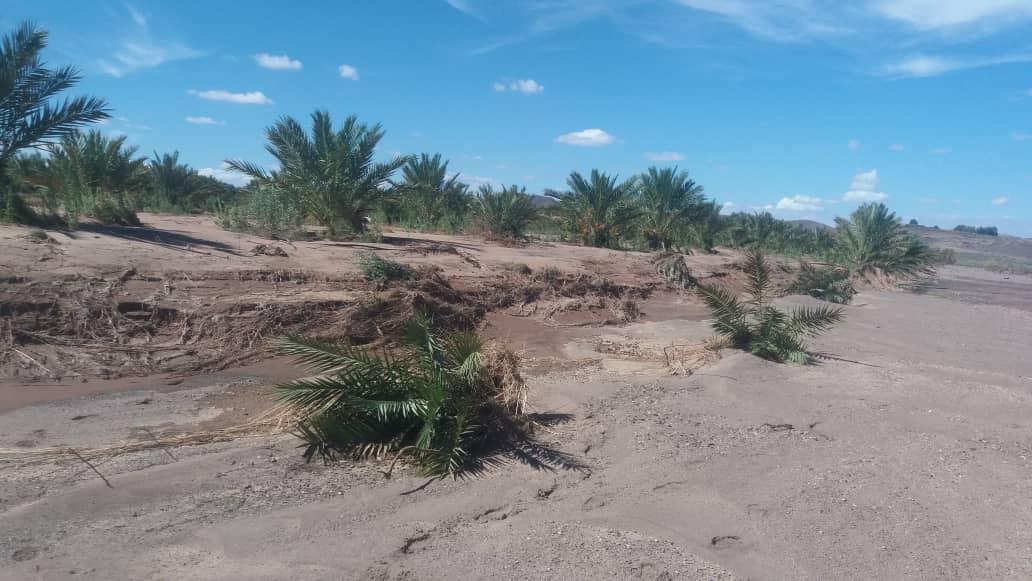 Floods could hamper Naute harvest