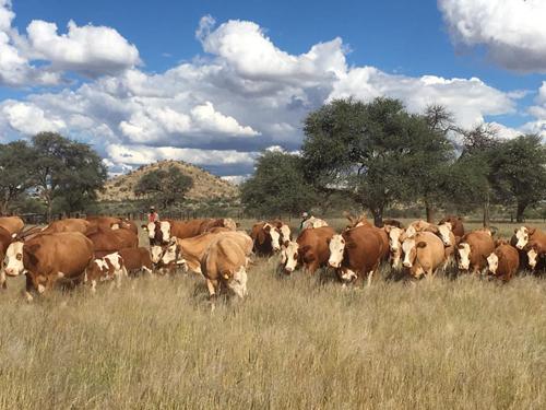 Common livestock poisonous plants...how to avoid livestock poisoning