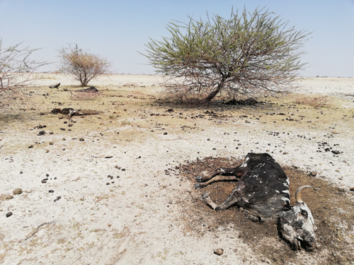 Kunene in grip of hunger... Omusati and Erongo also brace for drought misery