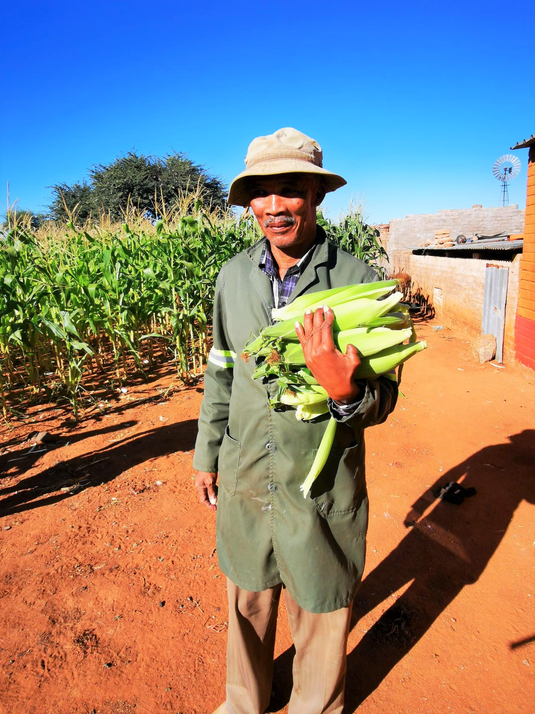 Crop producing areas records average yields