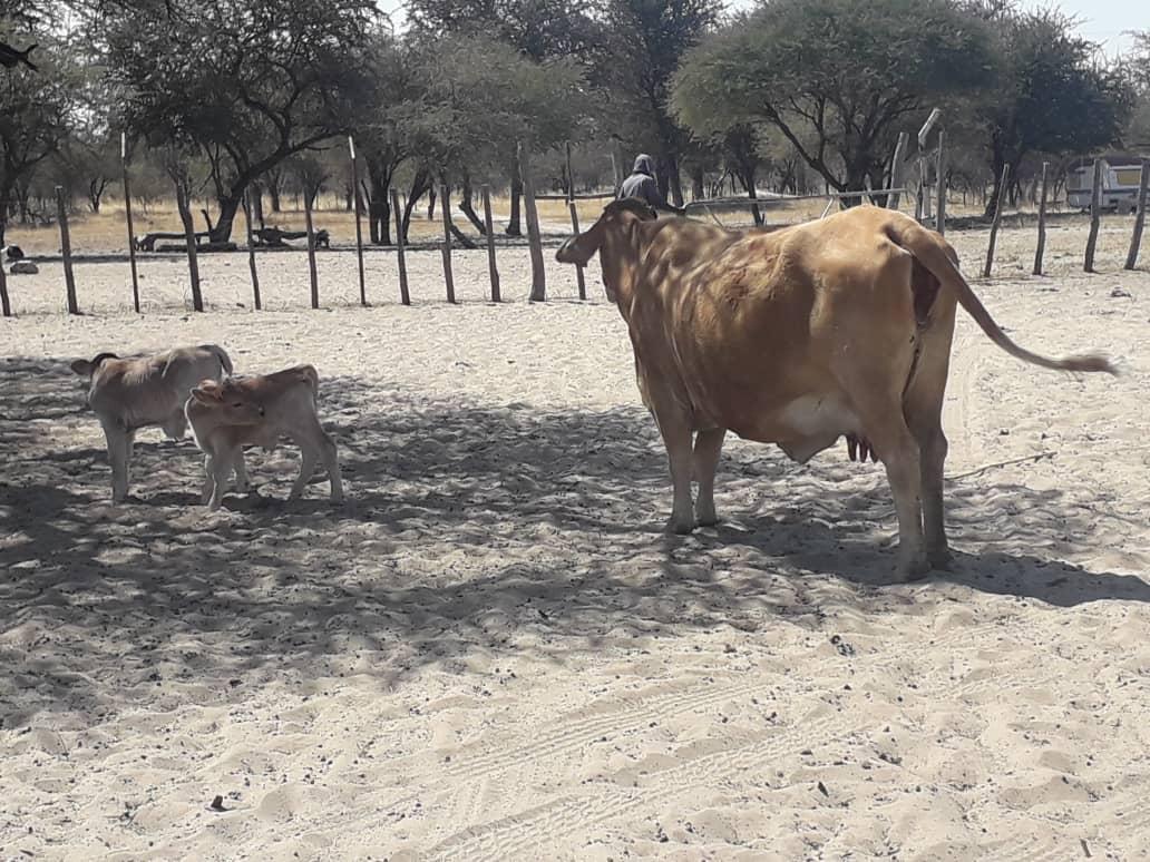 Oshikoto farmer scores rare farming double