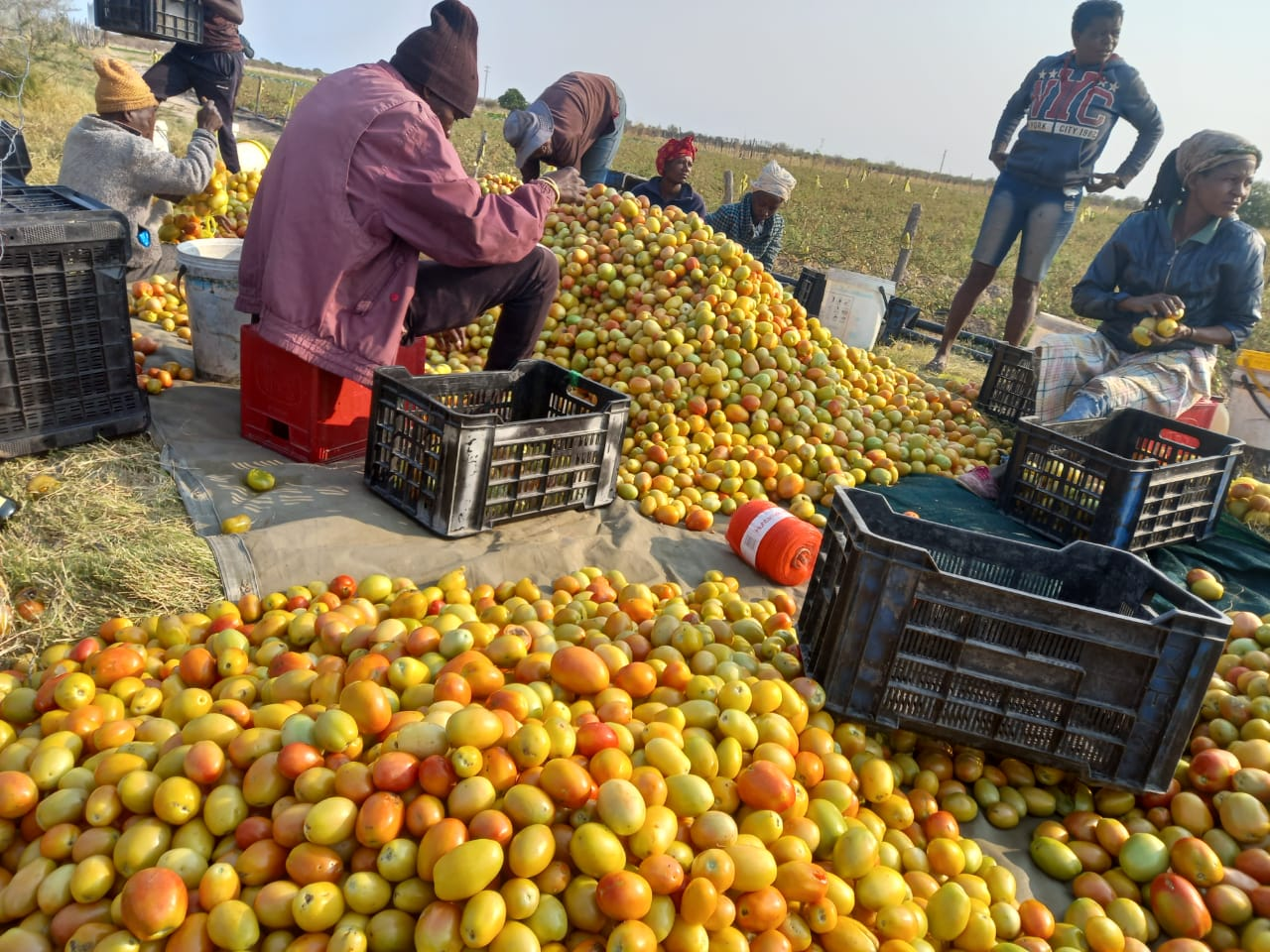 High production costs sink small-scale farmer