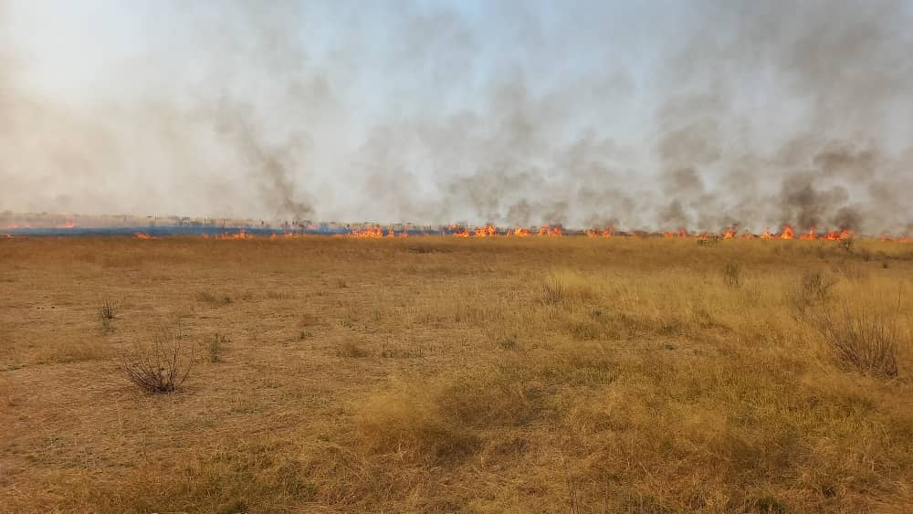 Farms damaged in veld fires